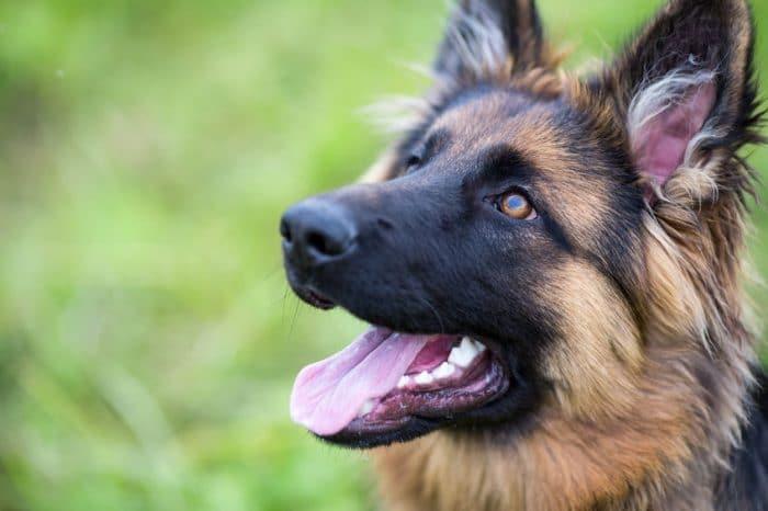 Perros para niños autistas