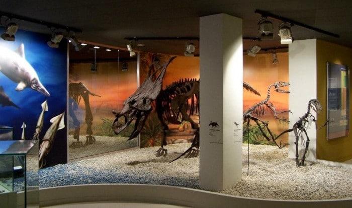 Dinosaurios Museo Paleontológico de Elche