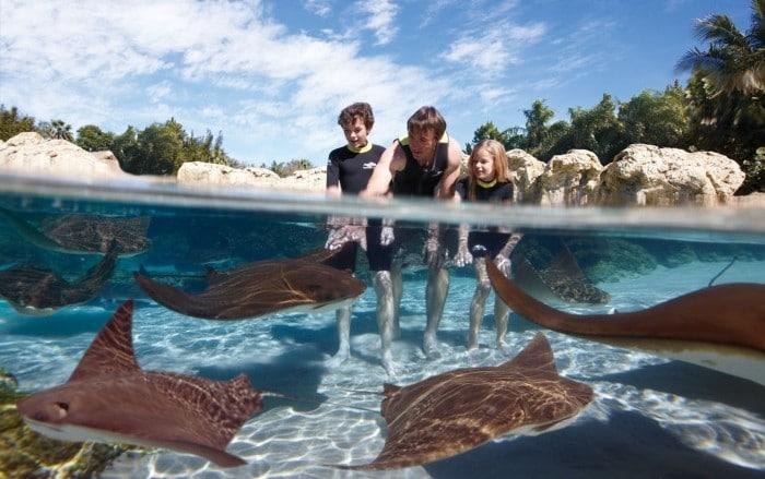 Peces Rayas en parque de atracciones Discovery Cove, en Orlando, Florida