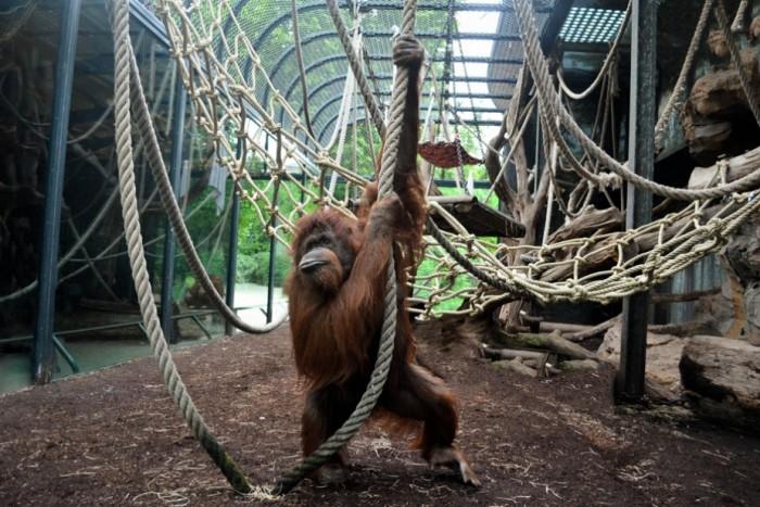 Parque zoológico Menagerie en Paris