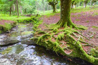 Excursión Parque Natural del Gorbea, enVizcaya