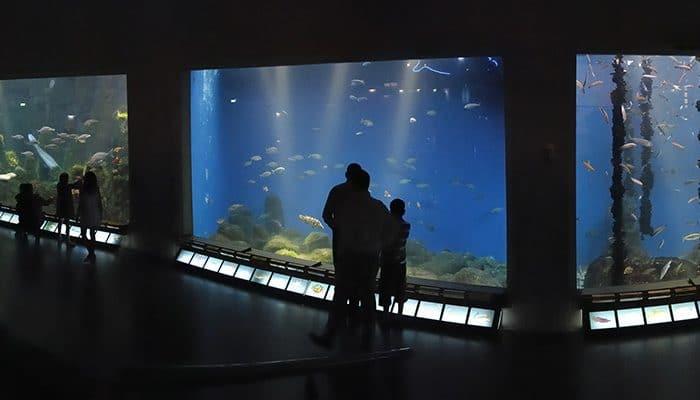 Aquarium Finisterrae, en A Coruña, Galicia