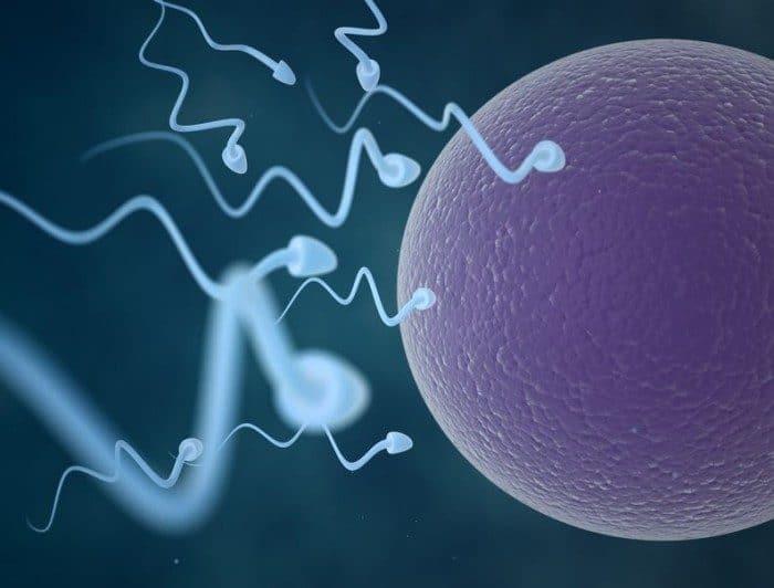 Calculadora de ovulación