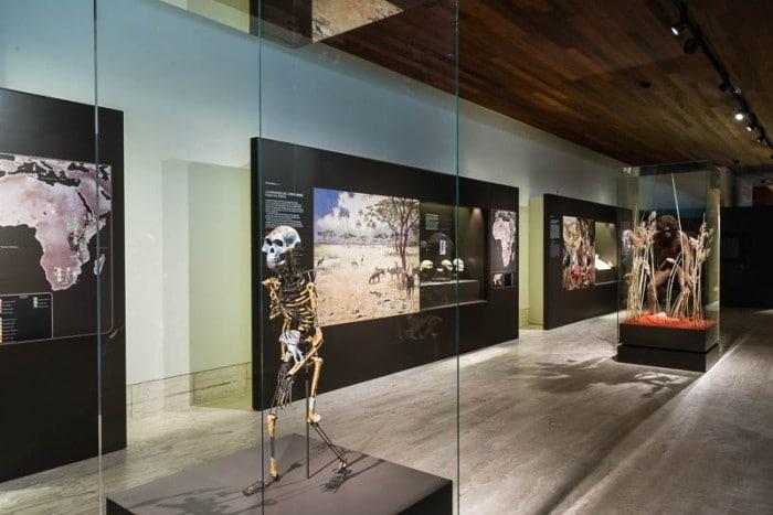 """Exposición """"Paisajes y sociedades de la Prehistoria reciente"""" enMuseo Arqueológico Nacional"""