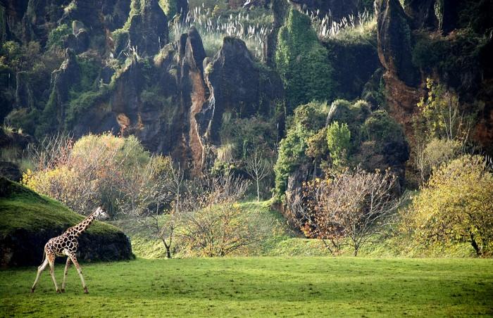 Jirafa en Parque de la Naturaleza de Cabárceno, Cantabria