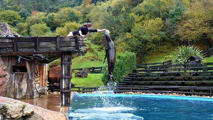 Leon marino en Parque de la Naturaleza de Cabárceno, Cantabria