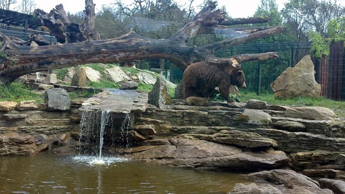Parque Zoológico Marcelle Natureza, en Lugo, Galicia