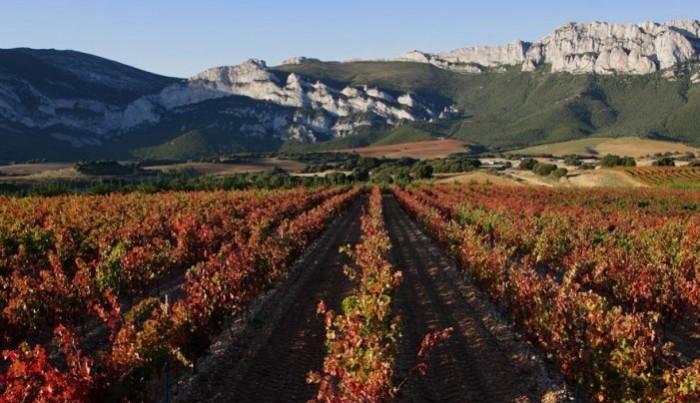 Ruta del vino de La Rioja. Planes para hacer con niños en Navidad