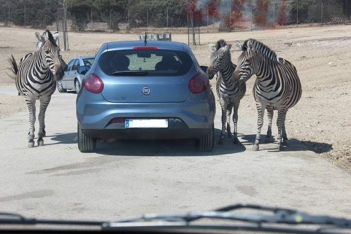 Safari Madrid, en Aldea del Fresno, Comunidad de Madrid