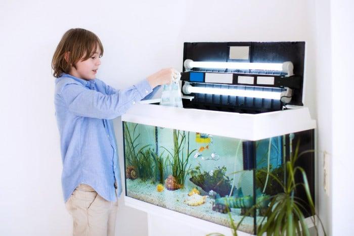 peces y ni%C3%B1os e1452526532267 - Las cinco mejores mascotas para los niños