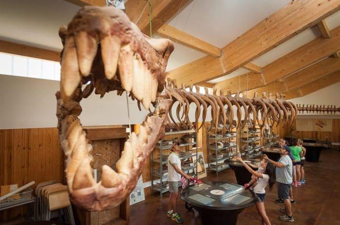 Circuito paleontologico laboratorio en elBarranco Perdido, en La Rioja
