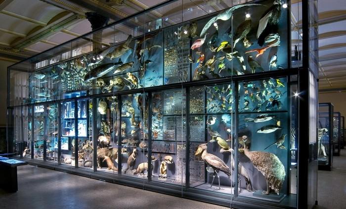 Escapada Museo de Ciencias Naturales, en Berlin, Alemania