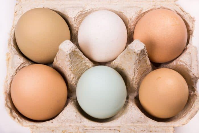 Huevos, alimento para mejorar concentración y memoria infantil