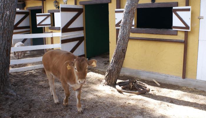 Albergue el Fuerte de Nagüeles, en Marbella