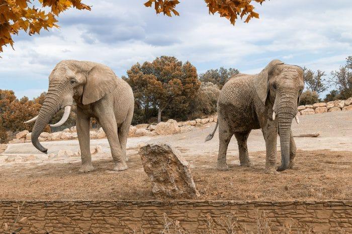 Elefantes en Reserva africana de Sigean