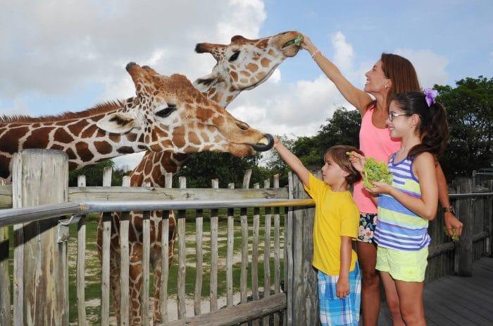 Miami Metro Zoo, en Miami
