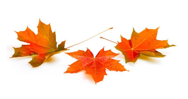 cuento otoño