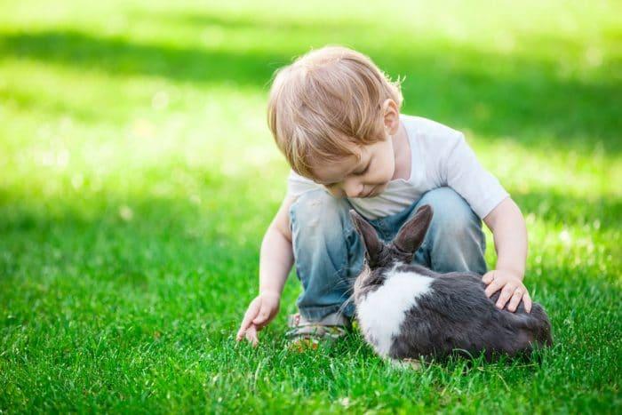 Experiencia niñoscontacto directo animales