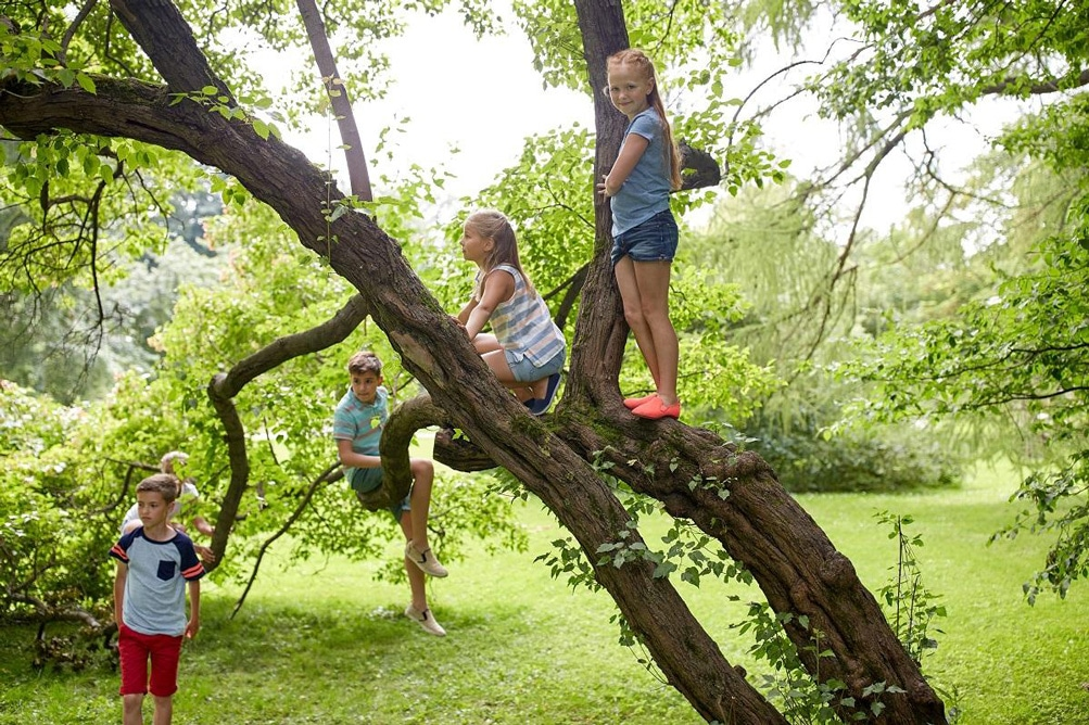 subirse arbol experiencia niños