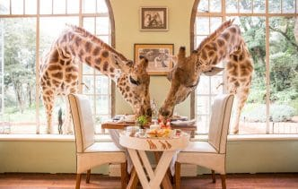 Hotel Giraffe Manor en Nairobi, Kenia