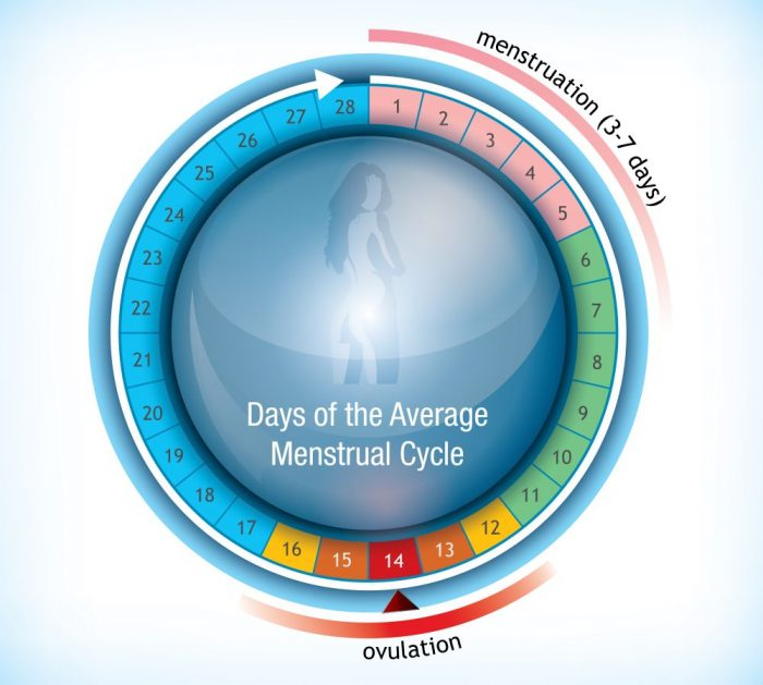 Dias Fertiles Mujer Calendario.Calendario De Ovulacion Etapa Infantil