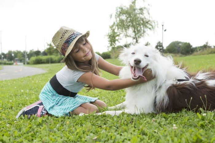 Esfera emocional perros similar niños