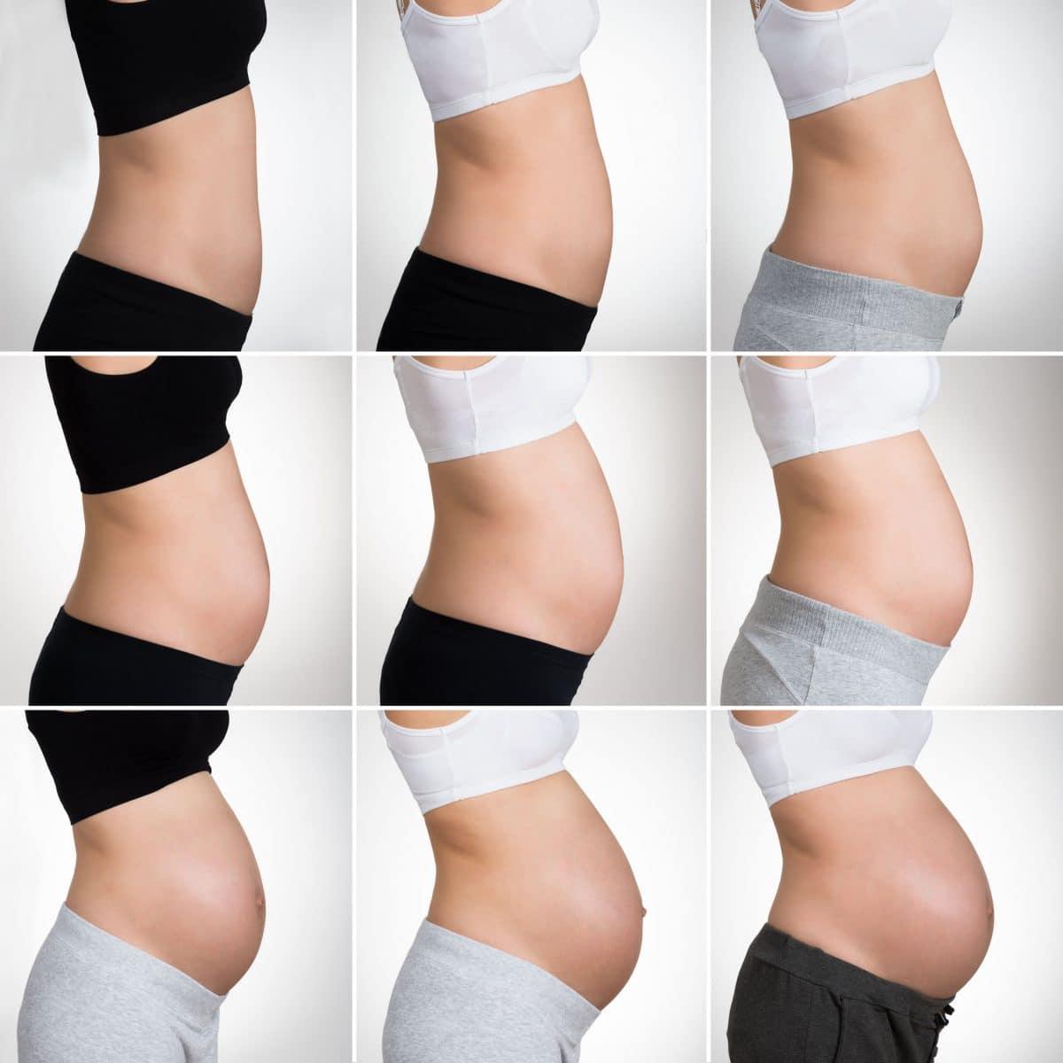 Desarrollo vientre materno embarazo mes a mes