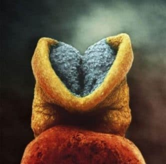 Aparece el cerebro en el embrión para comenzar a desarrollarse