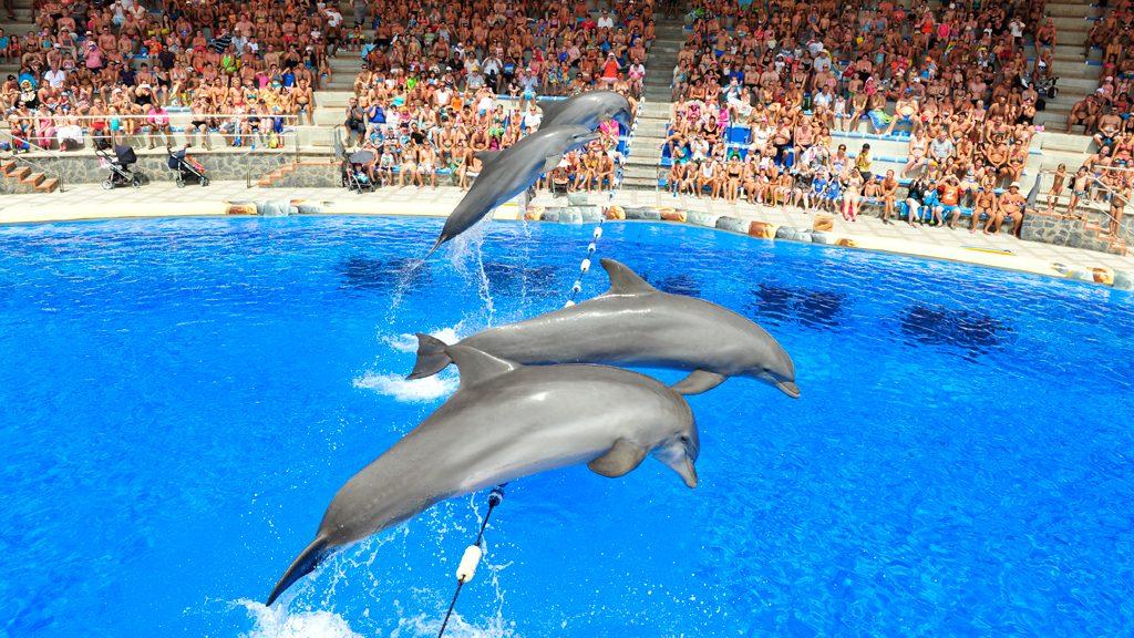 Delfines Aqualand Costa Adeje, en Santa Cruz de Tenerife