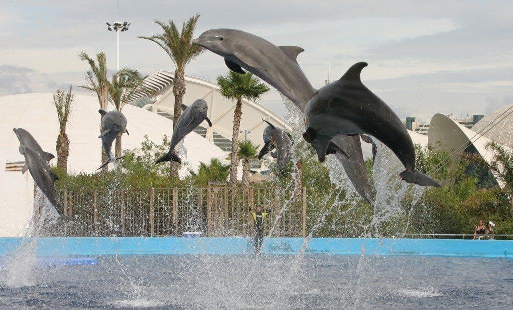 Delfines Oceanografic, en Valencia