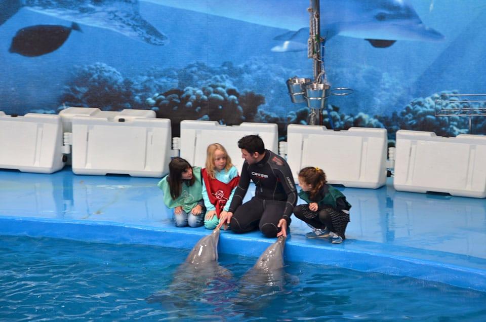 Delfines Zoológico, en Barcelona