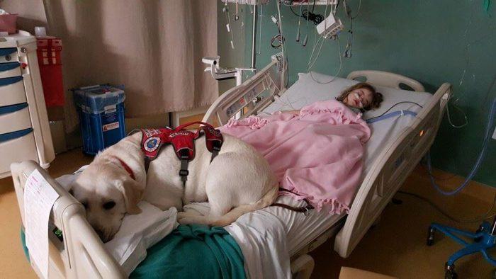 Sadie y Hero, niña con Síndrome de Down y su perro labrador 3