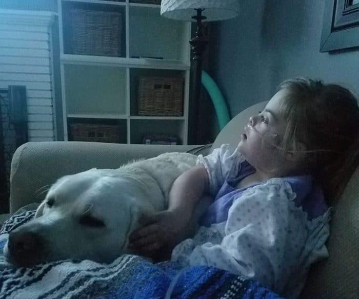 Sadie y Hero, niña con Síndrome de Down y su perro labrador 4