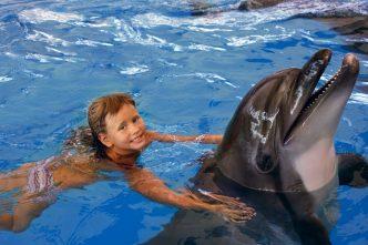 bañarse delfines actividades niños