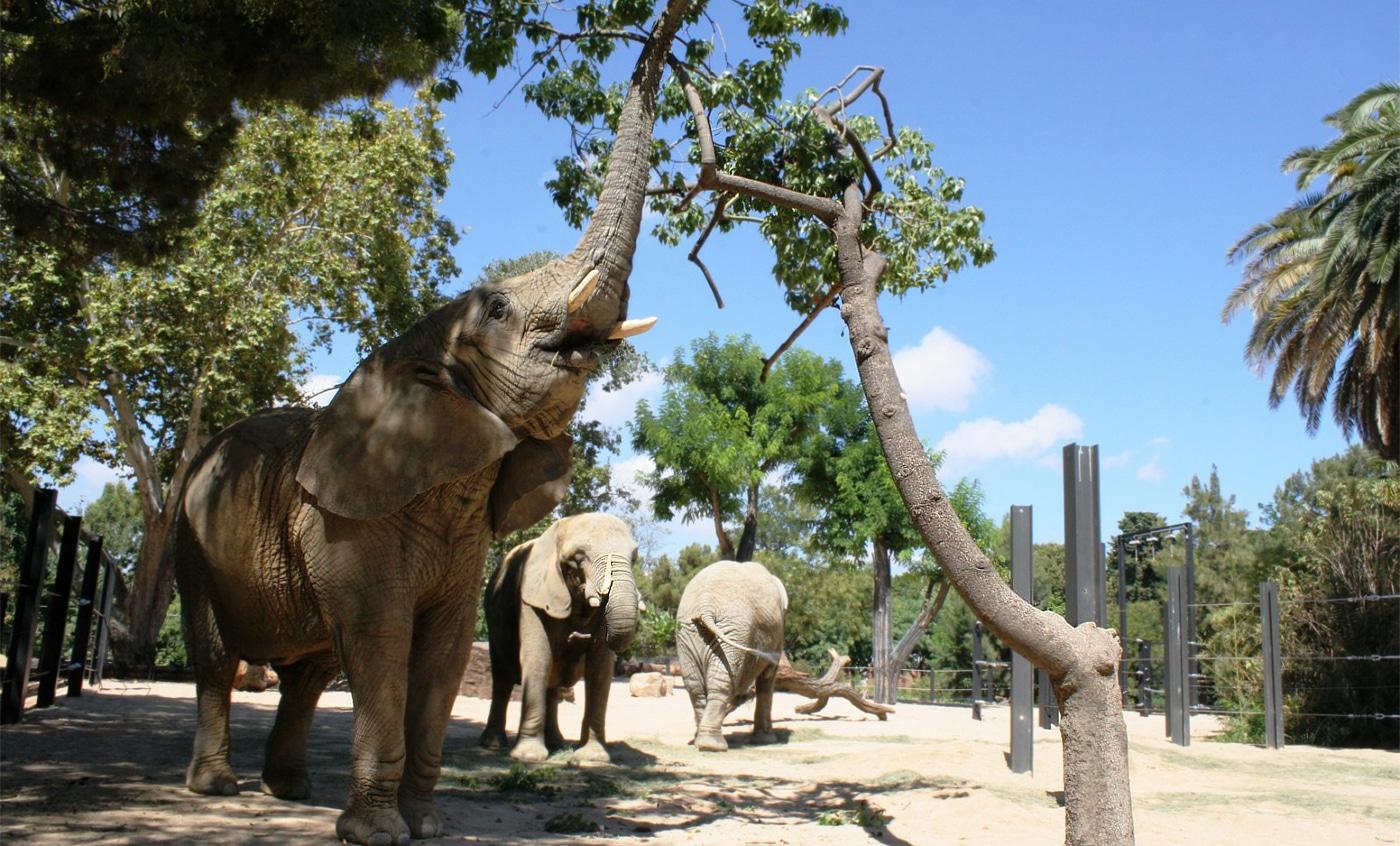 Zoológico de Barcelona