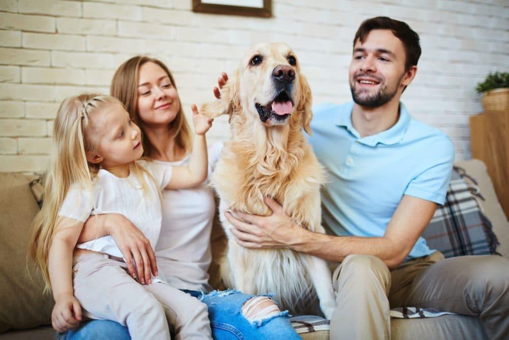 El gran poder emocional de los perros en la familia
