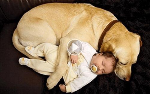 Mascota perro y bebé