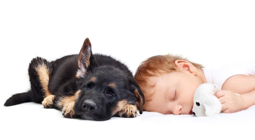 Qué hacen las mascotas cuando están solas con los bebés