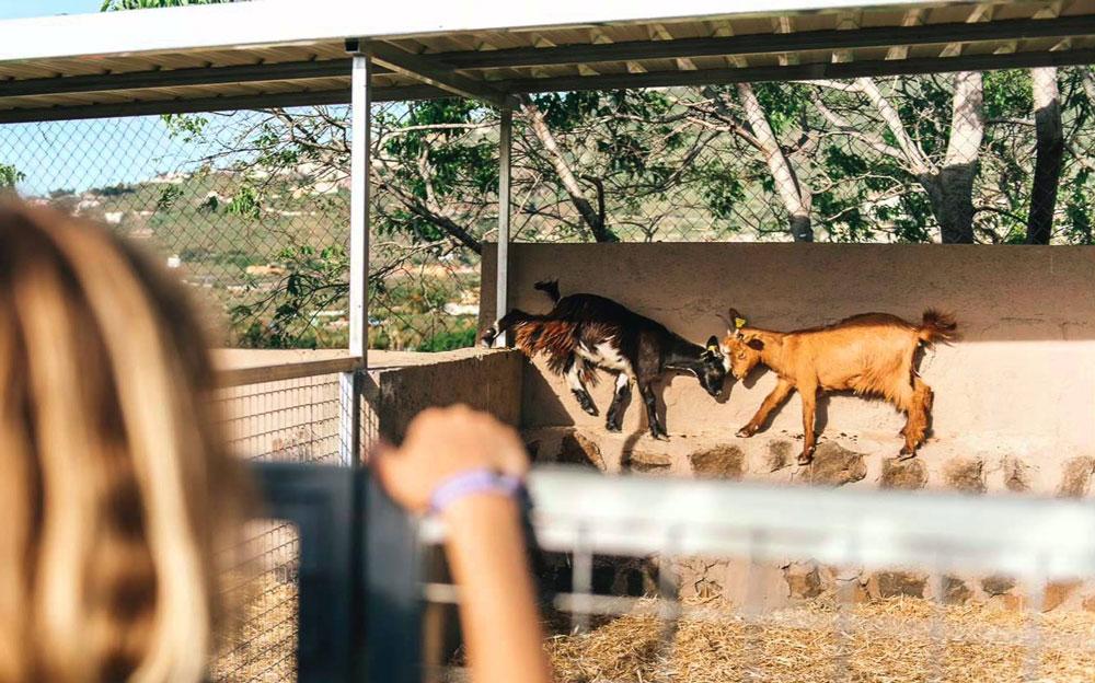 7 restaurantes con granja de animales para visitar en familia