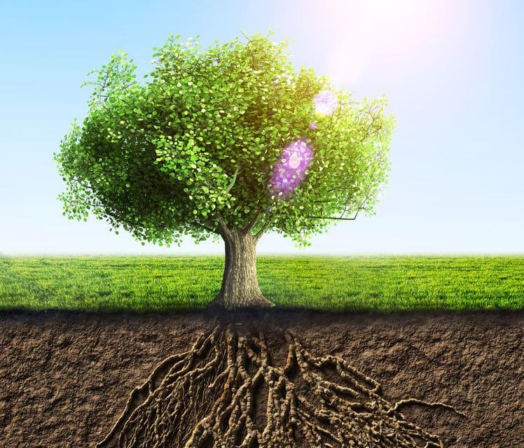 test árbol dibujo