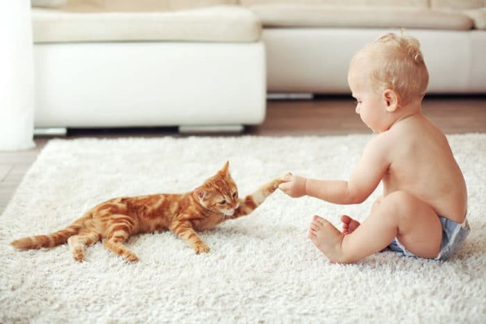 beneficios gatos niños bebes