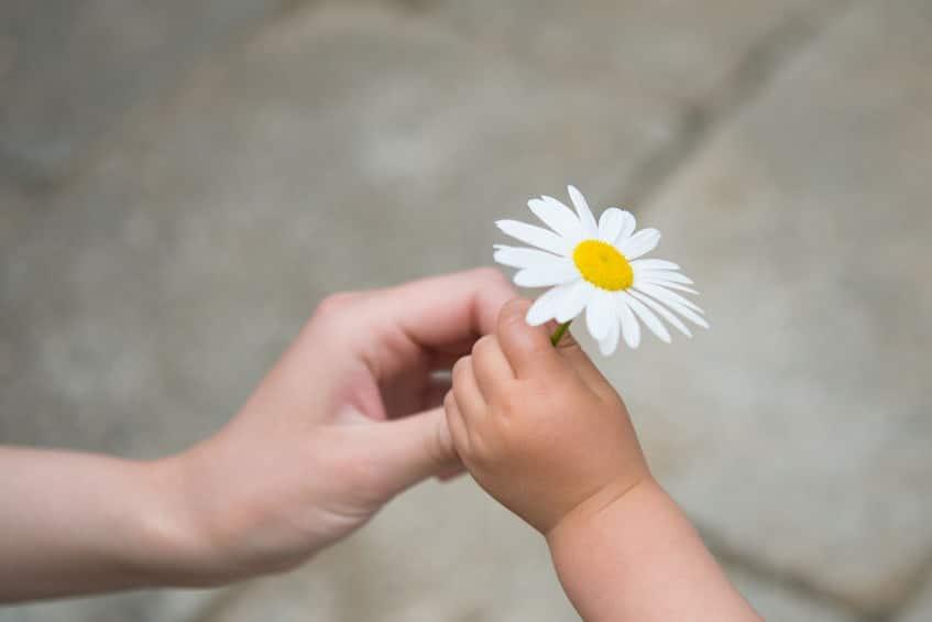 El poder transformador del agradecimiento
