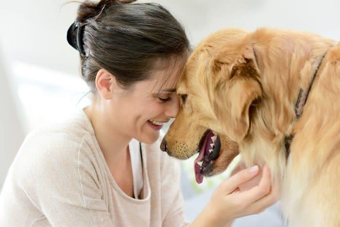 perros descubren embarazo