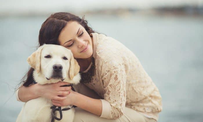 perros detectan embarazo