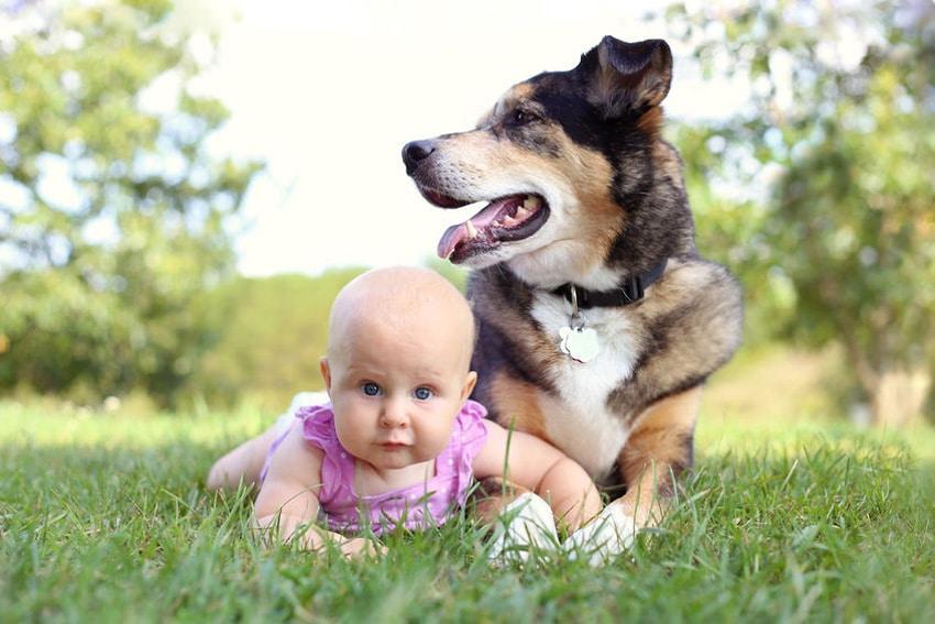 perro lame bebe