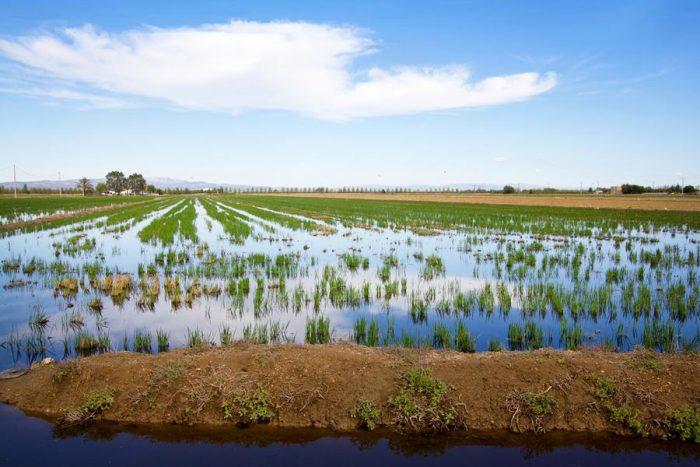 Turismo sostenibleDelta del Ebro