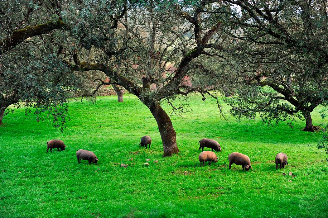 Turismo sostenible La Sierra de Huelva