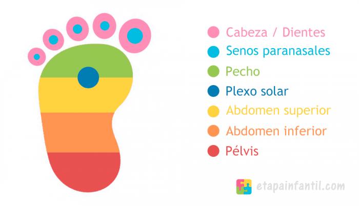 Reflexología podal para bebés puntos