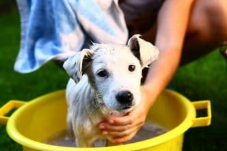 empatia canina