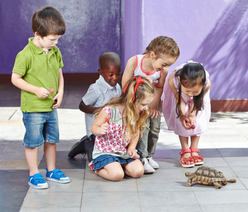 Celebra el cumpleaños infantil en un zoológico